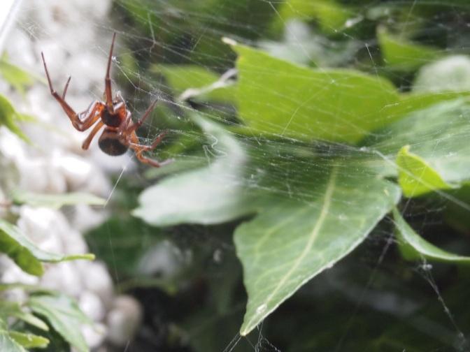 Spider Frights
